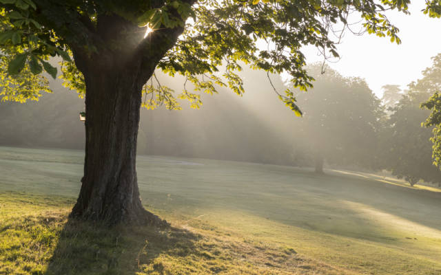 Dawn light, Waddesdon Manor gardens with tree in the foreground
